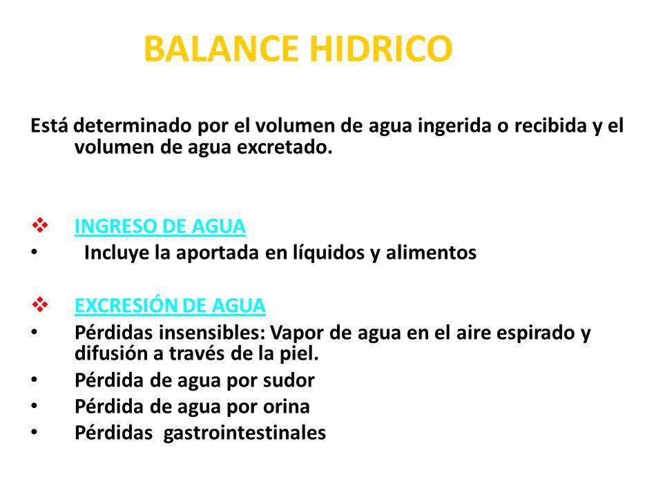 BALANCE HIDRICO Está determinado por el volumen de agua ingerida o recibida y el volumen de agua excretado.