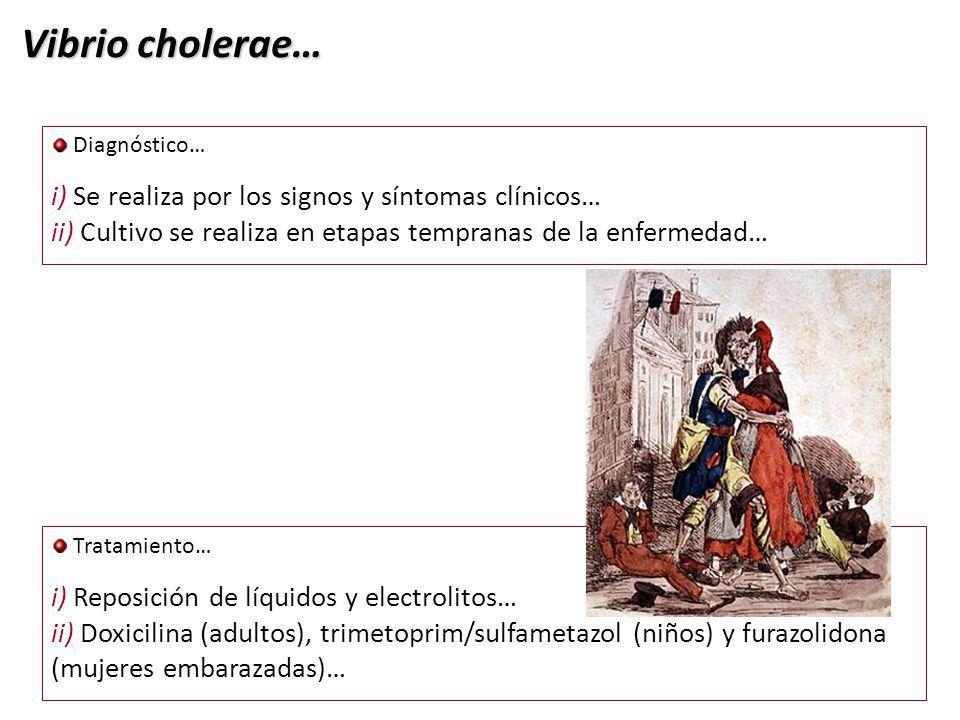 Vibrio cholerae… i) Se realiza por los signos y síntomas clínicos…