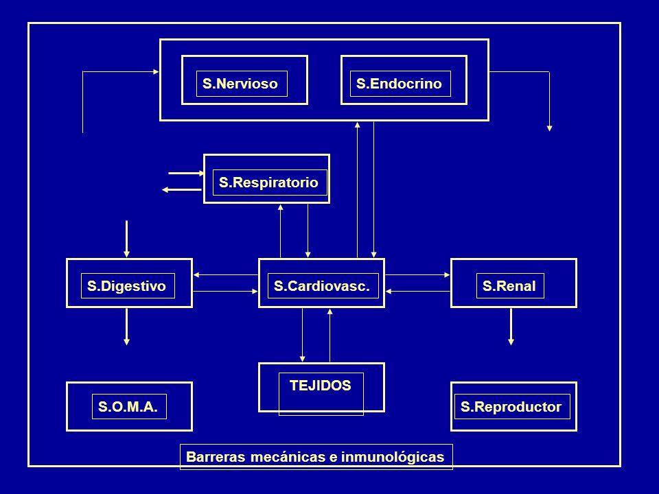S.Nervioso S.Endocrino. S.Respiratorio. S.Cardiovasc. S.Digestivo. S.Renal. TEJIDOS. S.O.M.A.