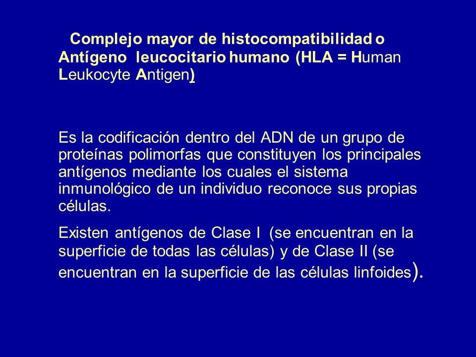 Complejo mayor de histocompatibilidad o Antígeno leucocitario humano (HLA = Human Leukocyte Antigen)