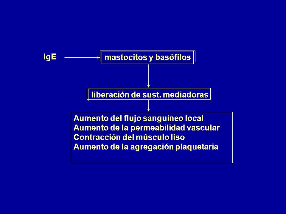 IgE mastocitos y basófilos. liberación de sust. mediadoras. Aumento del flujo sanguíneo local. Aumento de la permeabilidad vascular.