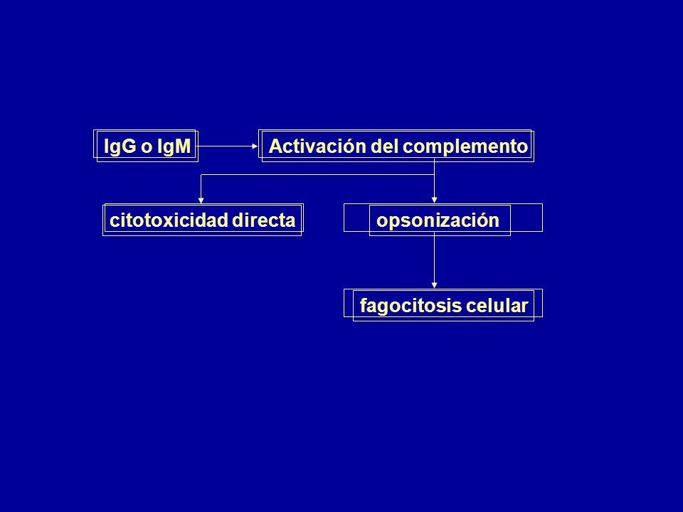 IgG o IgM Activación del complemento opsonización citotoxicidad directa fagocitosis celular