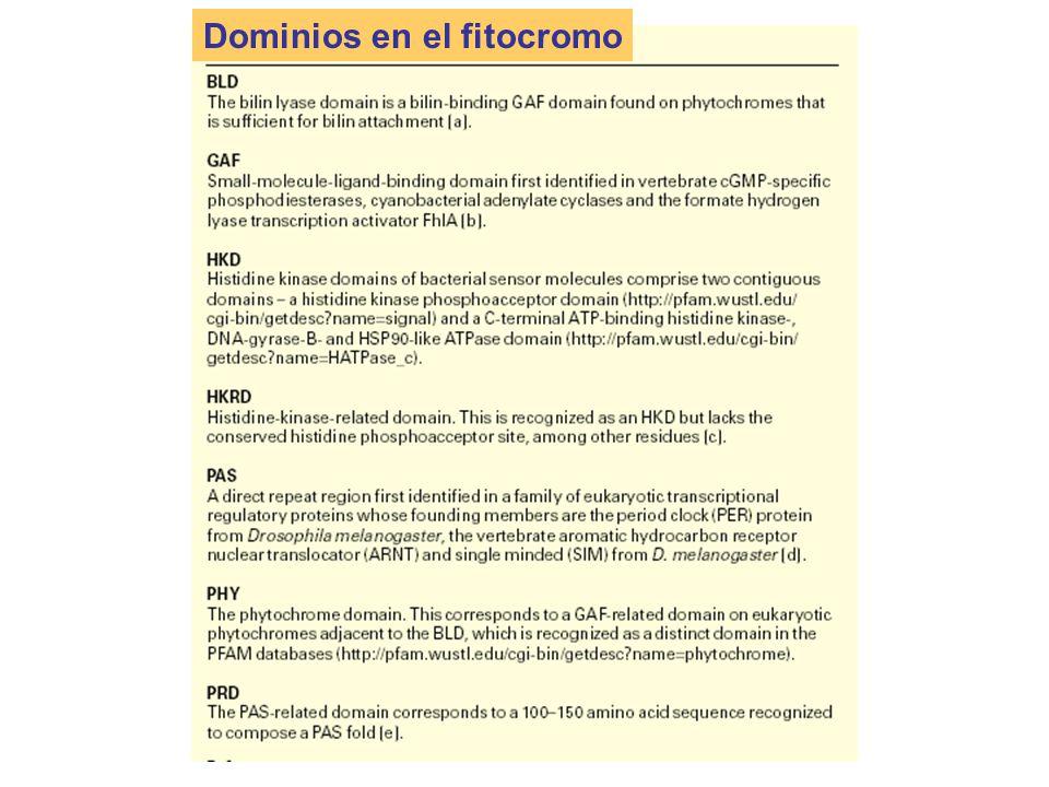 Dominios en el fitocromo