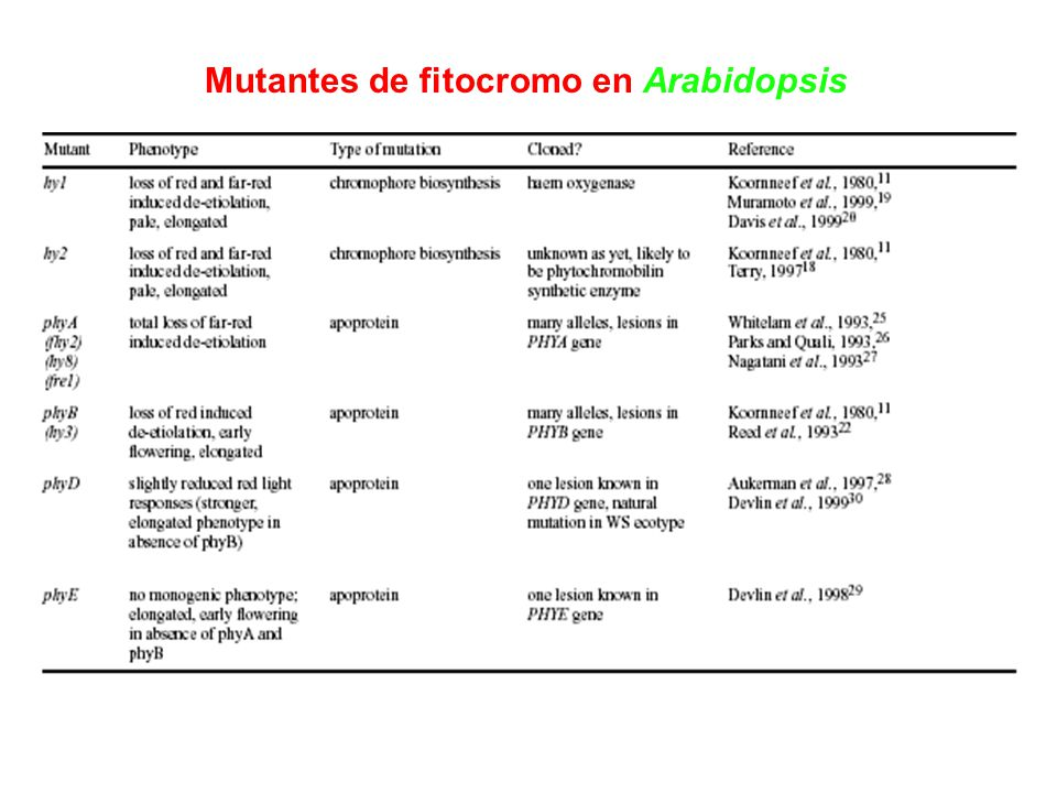 Mutantes de fitocromo en Arabidopsis
