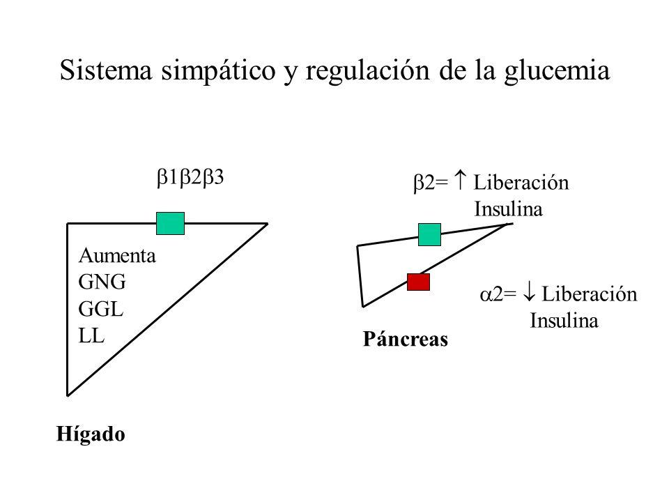 Sistema simpático y regulación de la glucemia