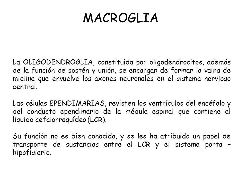 MACROGLIA