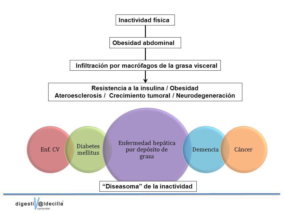 Infiltración por macrófagos de la grasa visceral