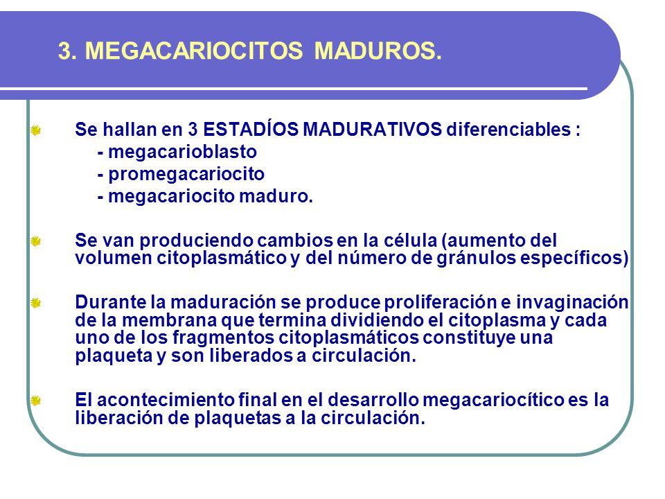 3. MEGACARIOCITOS MADUROS.