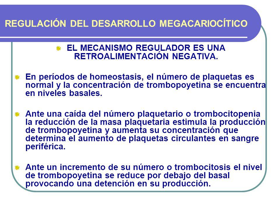 REGULACIÓN DEL DESARROLLO MEGACARIOCÍTICO