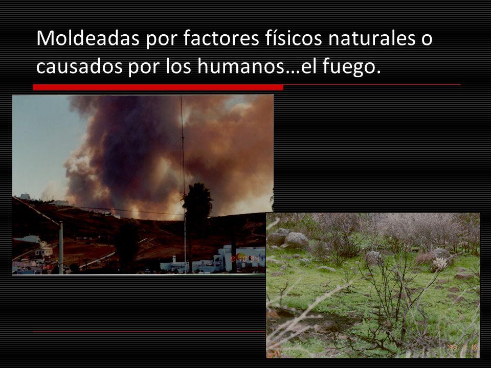 Moldeadas por factores físicos naturales o causados por los humanos…el fuego.
