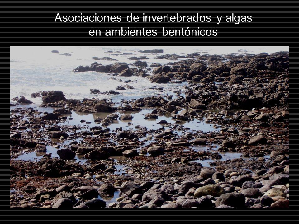 Asociaciones de invertebrados y algas en ambientes bentónicos