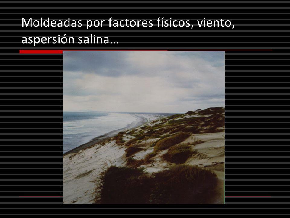 Moldeadas por factores físicos, viento, aspersión salina…