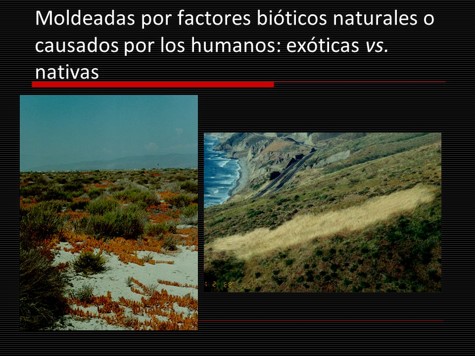 Moldeadas por factores bióticos naturales o causados por los humanos: exóticas vs. nativas