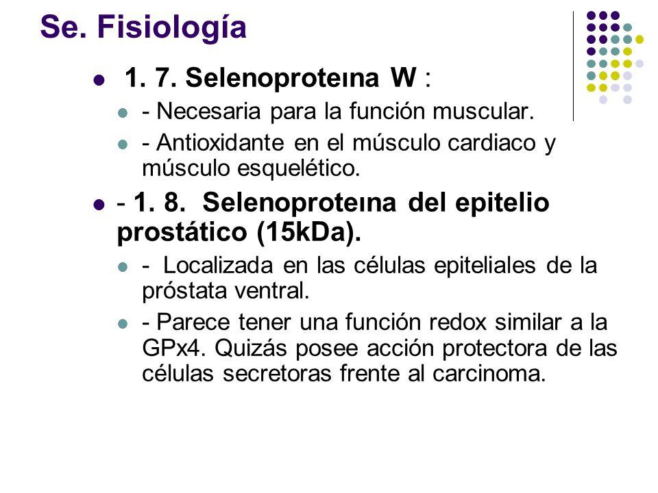 Se. Fisiología 1. 7. Selenoproteına W :