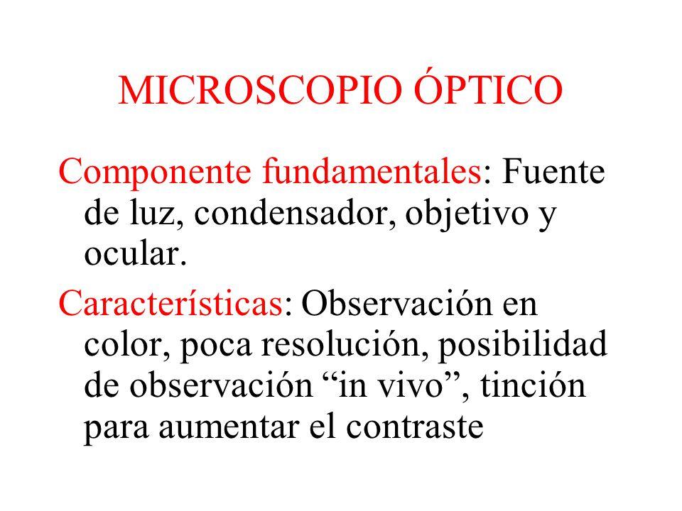 MICROSCOPIO ÓPTICO Componente fundamentales: Fuente de luz, condensador, objetivo y ocular.
