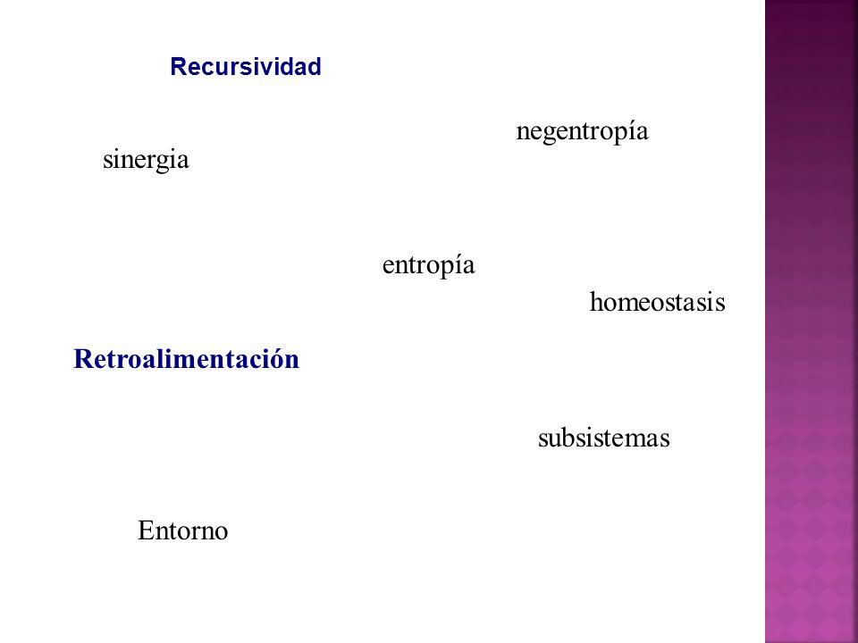 negentropía sinergia entropía homeostasis Retroalimentación
