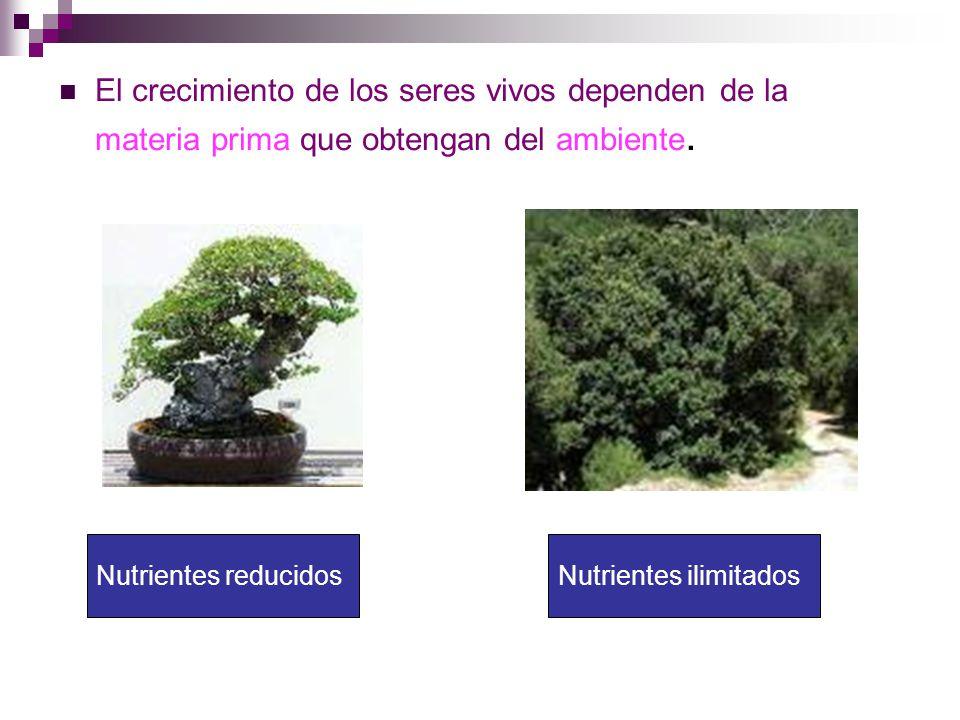 El crecimiento de los seres vivos dependen de la materia prima que obtengan del ambiente.
