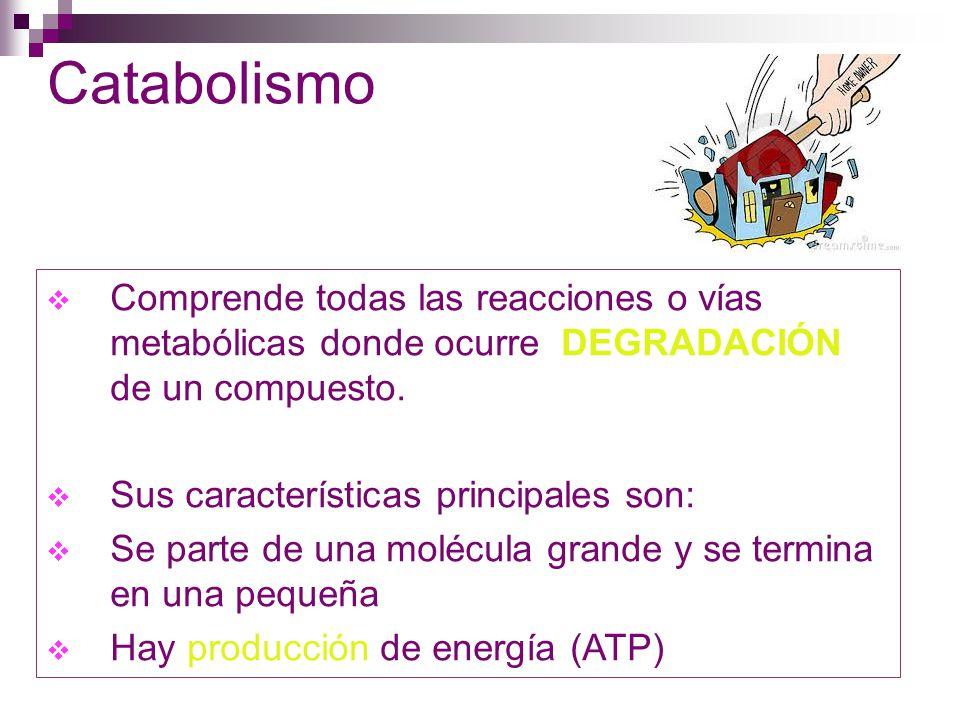 Catabolismo Comprende todas las reacciones o vías metabólicas donde ocurre DEGRADACIÓN de un compuesto.
