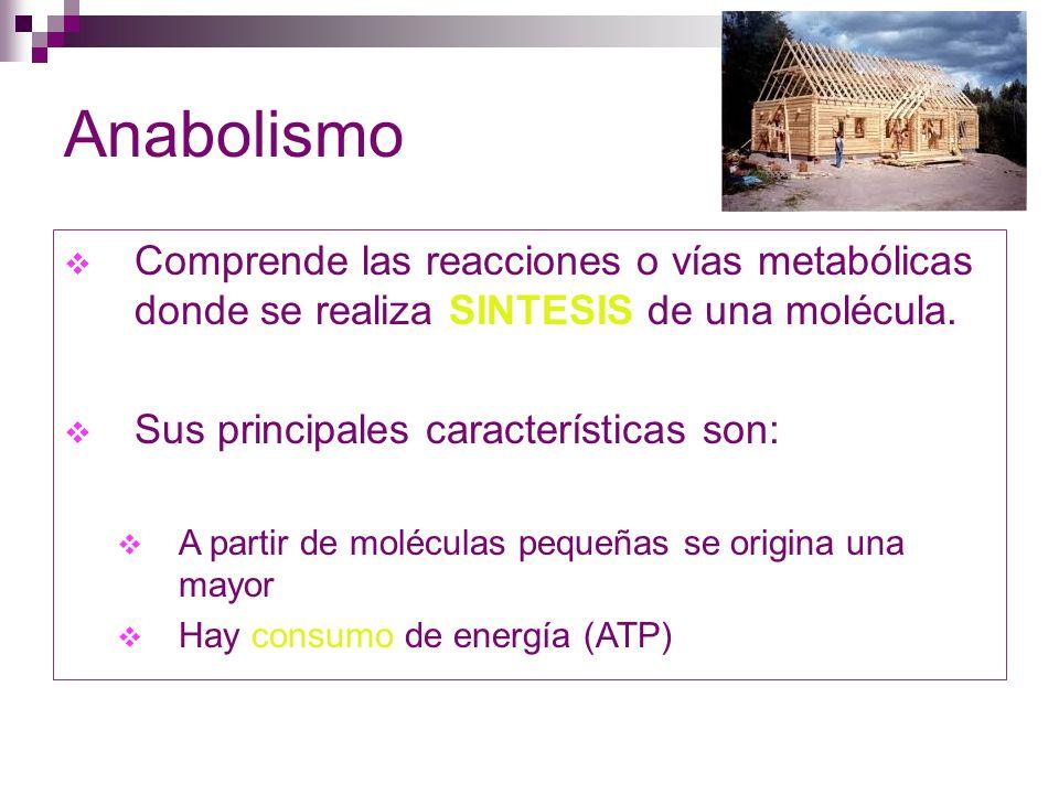 Anabolismo Comprende las reacciones o vías metabólicas donde se realiza SINTESIS de una molécula. Sus principales características son: