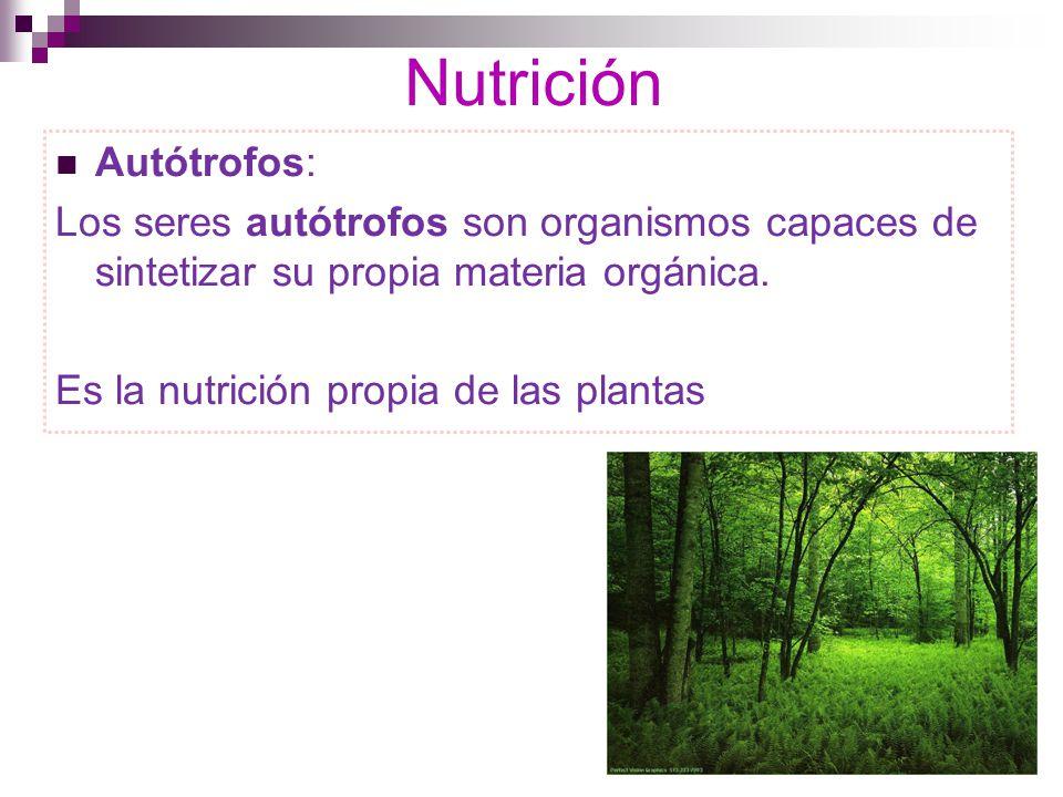 Nutrición Autótrofos: