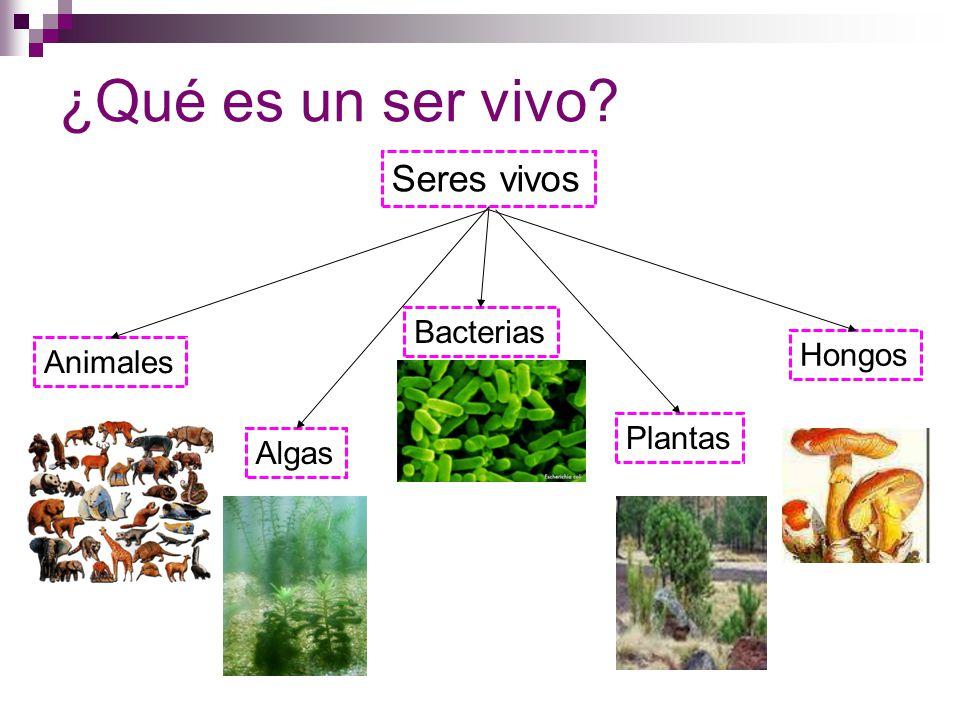 ¿Qué es un ser vivo Seres vivos Bacterias Hongos Animales Plantas