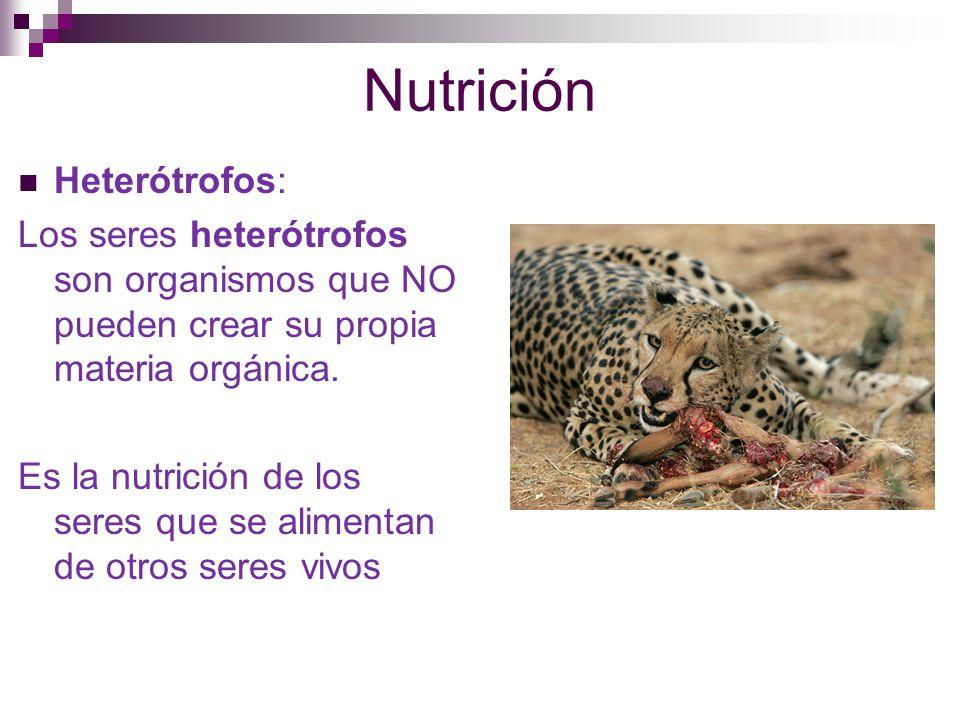 Nutrición Heterótrofos: