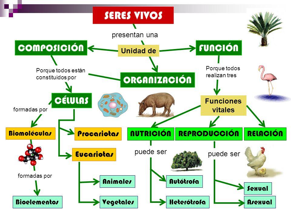 SERES VIVOS COMPOSICIÓN FUNCIÓN ORGANIZACIÓN CÉLULAS Procariotas