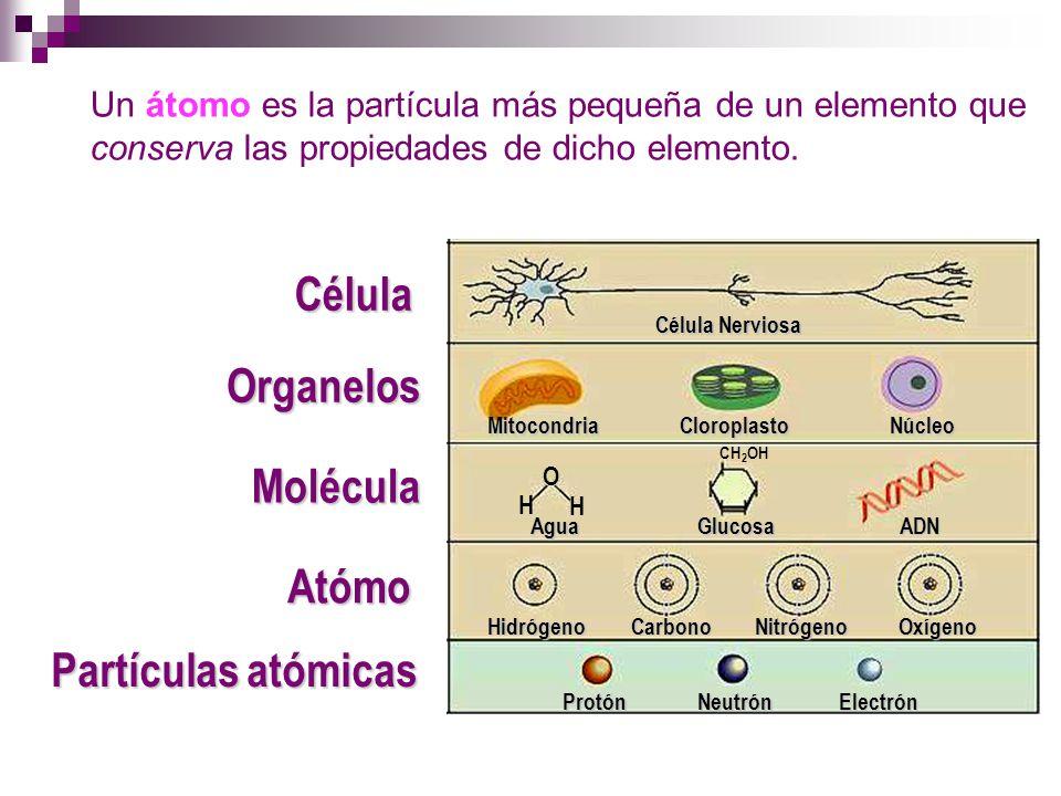 Célula Organelos Molécula Atómo Partículas atómicas