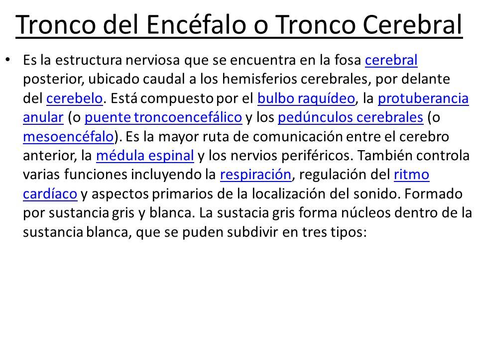 Tronco del Encéfalo o Tronco Cerebral
