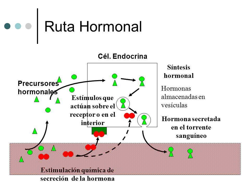 Ruta Hormonal Cél. Endocrina Síntesis hormonal Precursores hormonales