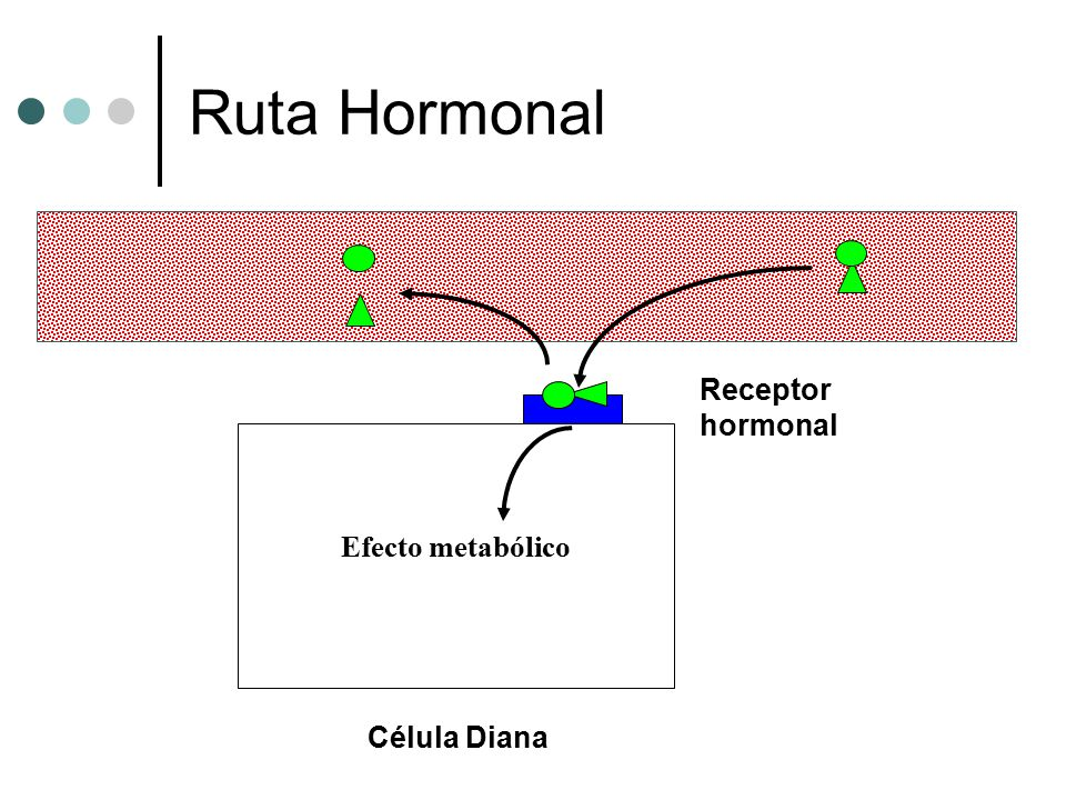 Ruta Hormonal Receptor hormonal Efecto metabólico Célula Diana