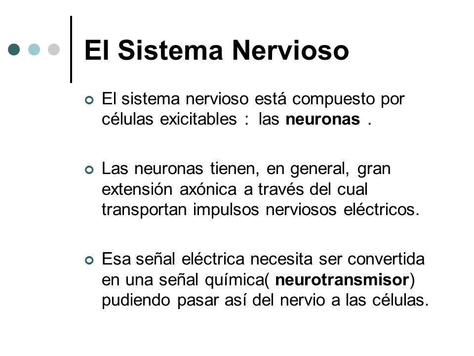 El Sistema Nervioso El sistema nervioso está compuesto por células exicitables : las neuronas .