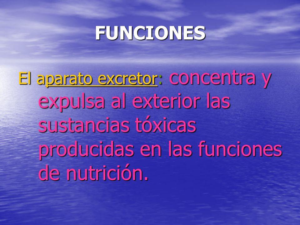 FUNCIONES El aparato excretor: concentra y expulsa al exterior las sustancias tóxicas producidas en las funciones de nutrición.