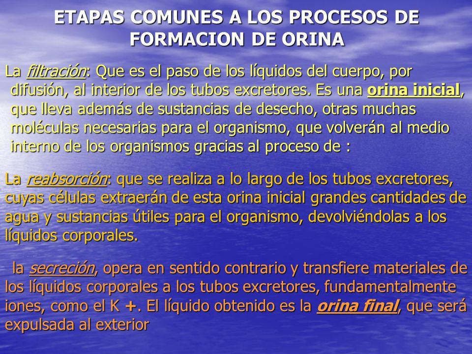 ETAPAS COMUNES A LOS PROCESOS DE FORMACION DE ORINA