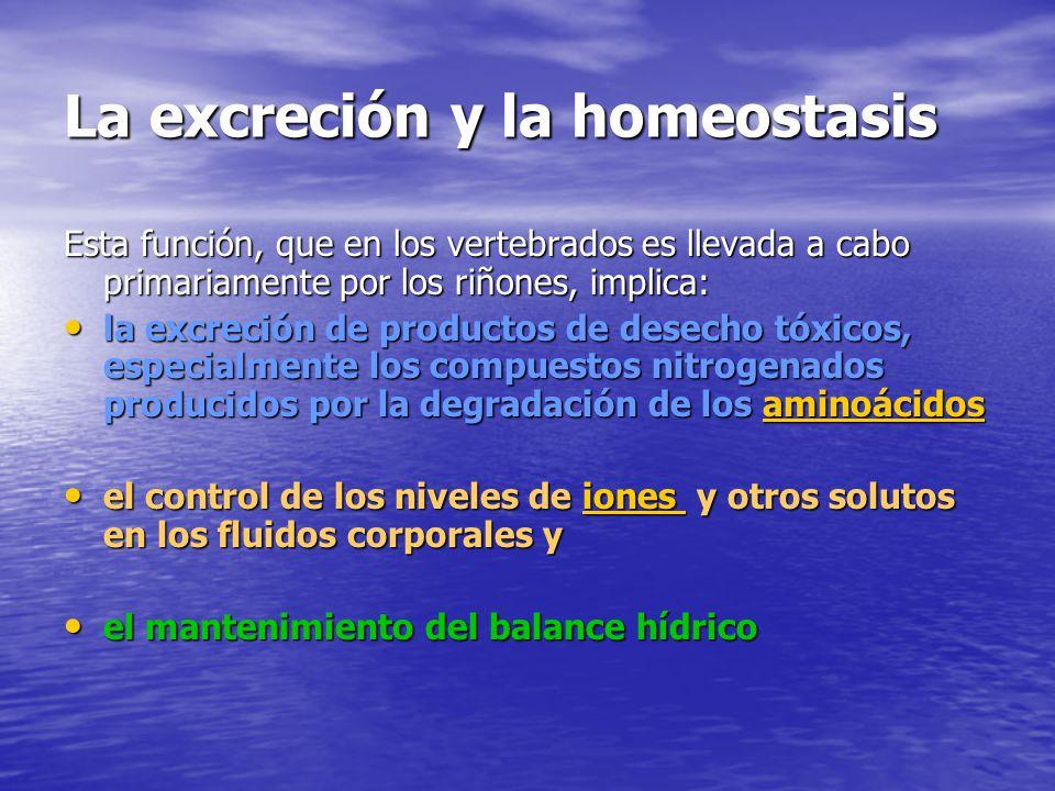 La excreción y la homeostasis