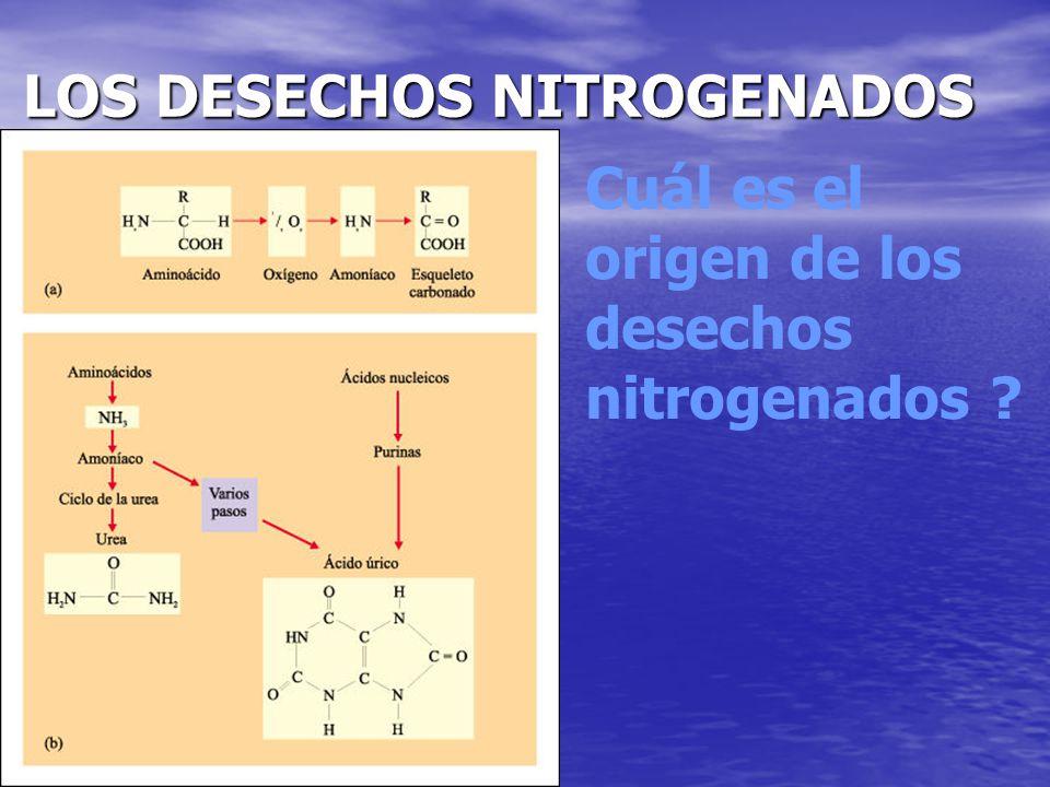 LOS DESECHOS NITROGENADOS
