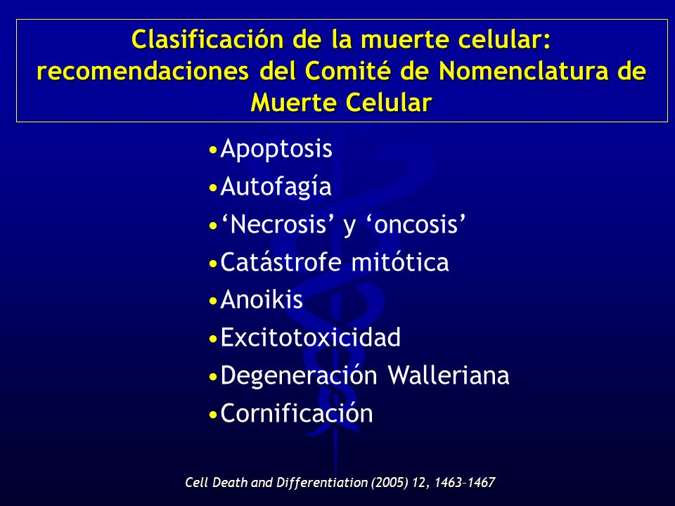 Cell Death and Differentiation (2005) 12, 1463–1467