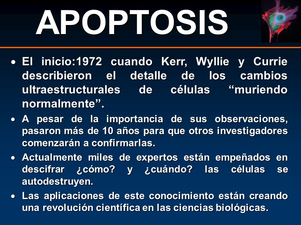 APOPTOSIS El inicio:1972 cuando Kerr, Wyllie y Currie describieron el detalle de los cambios ultraestructurales de células muriendo normalmente .