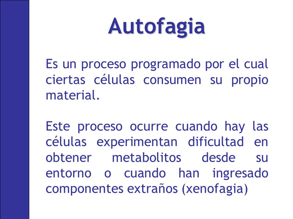 Autofagia Es un proceso programado por el cual ciertas células consumen su propio material.
