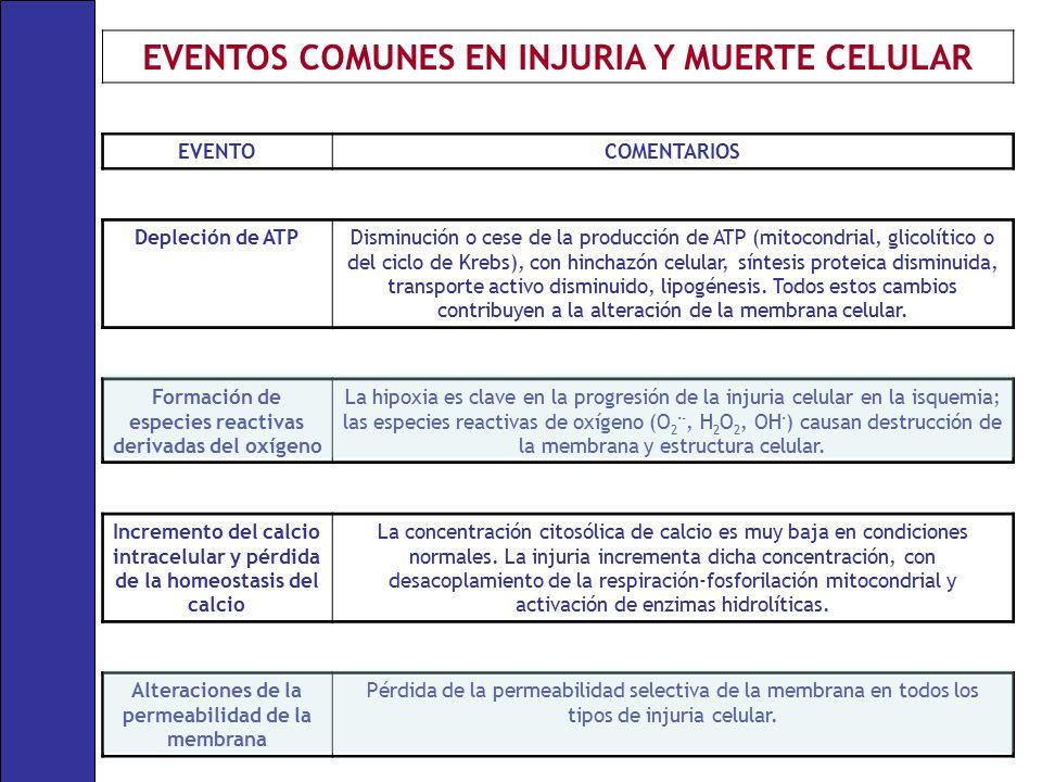 EVENTOS COMUNES EN INJURIA Y MUERTE CELULAR