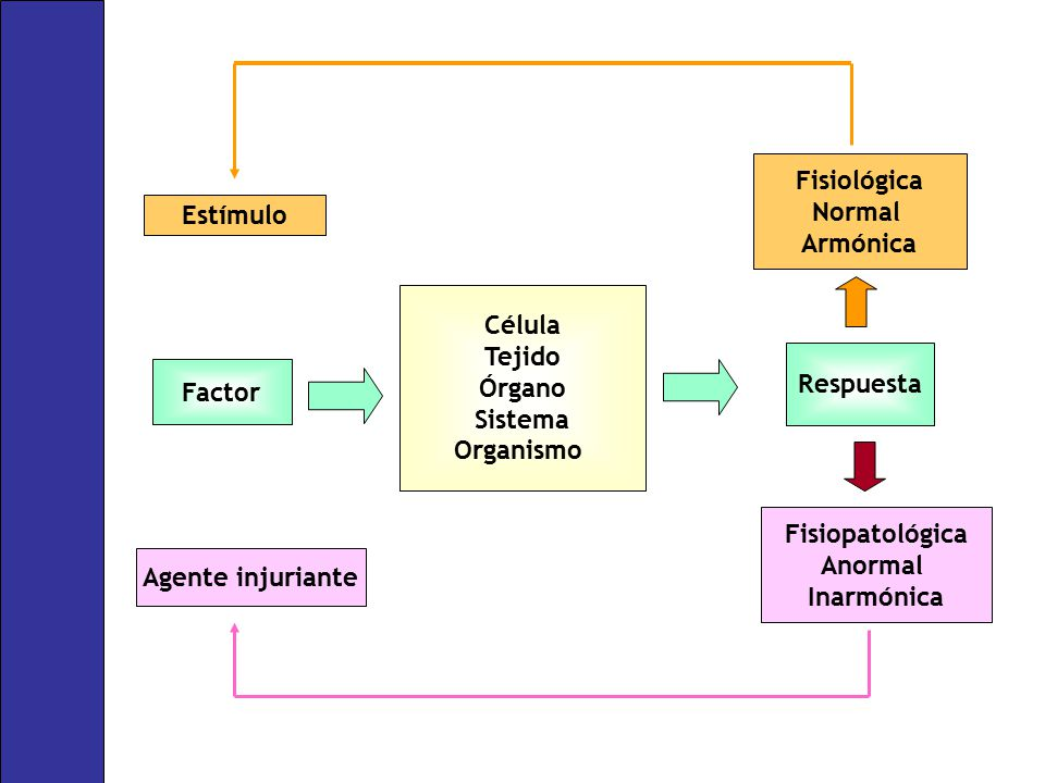 Fisiológica Normal. Armónica. Estímulo. Célula. Tejido. Órgano. Sistema. Organismo. Respuesta.