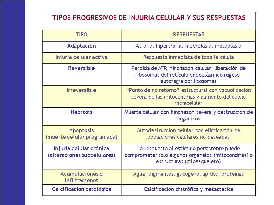 TIPOS PROGRESIVOS DE INJURIA CELULAR Y SUS RESPUESTAS