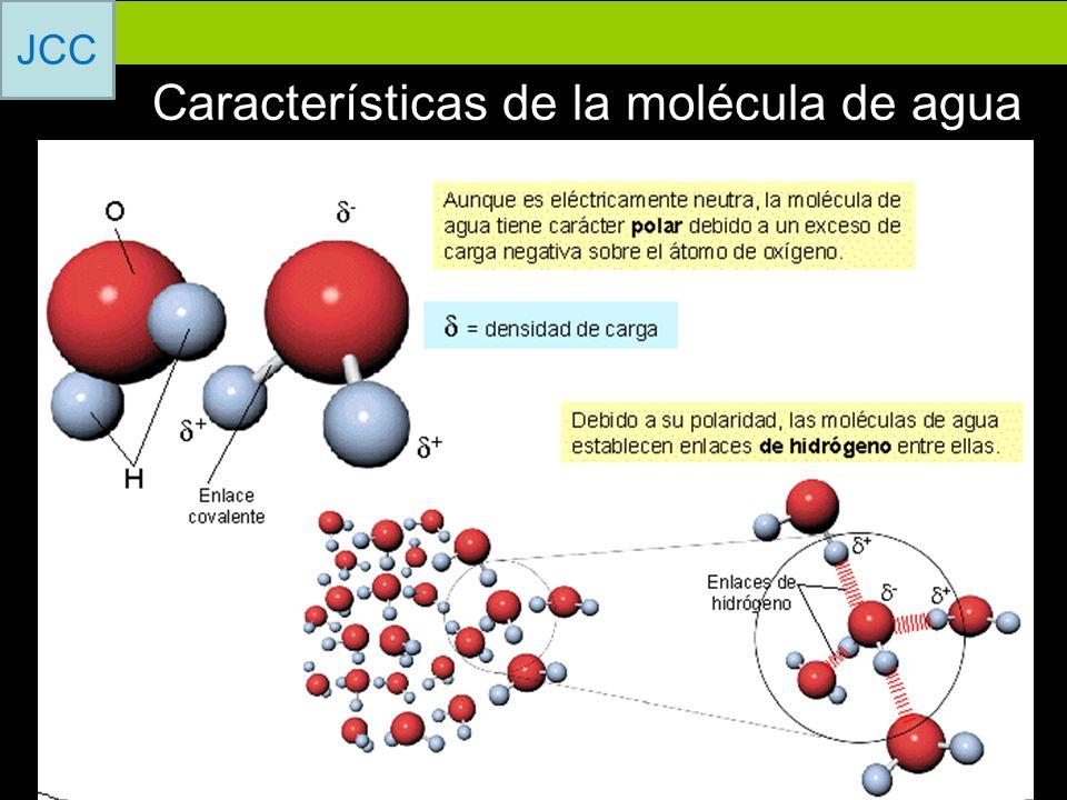 Características de la molécula de agua