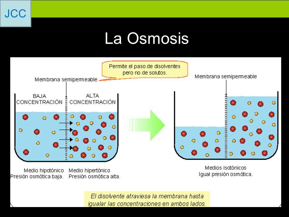 La Osmosis
