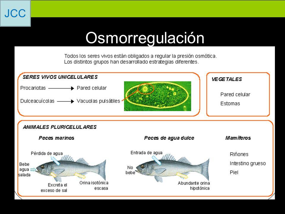 Osmorregulación