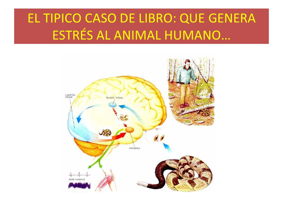 EL TIPICO CASO DE LIBRO: QUE GENERA ESTRÉS AL ANIMAL HUMANO…