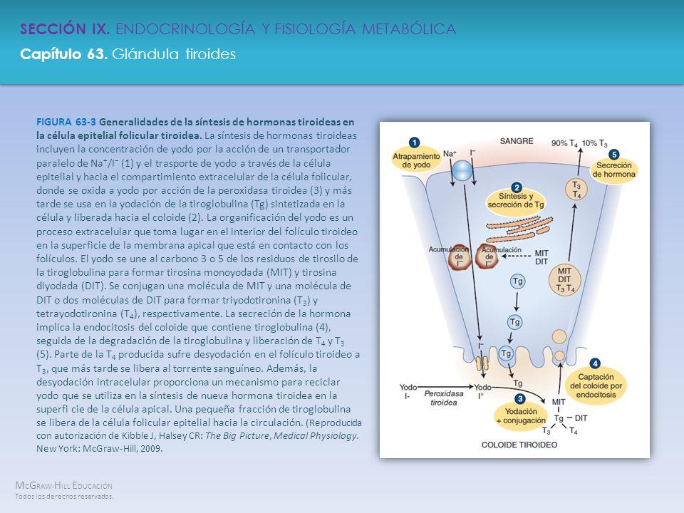 FIGURA 63-3 Generalidades de la síntesis de hormonas tiroideas en la célula epitelial folicular tiroidea.