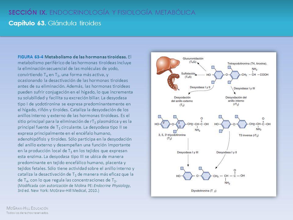 FIGURA 63-4 Metabolismo de las hormonas tiroideas