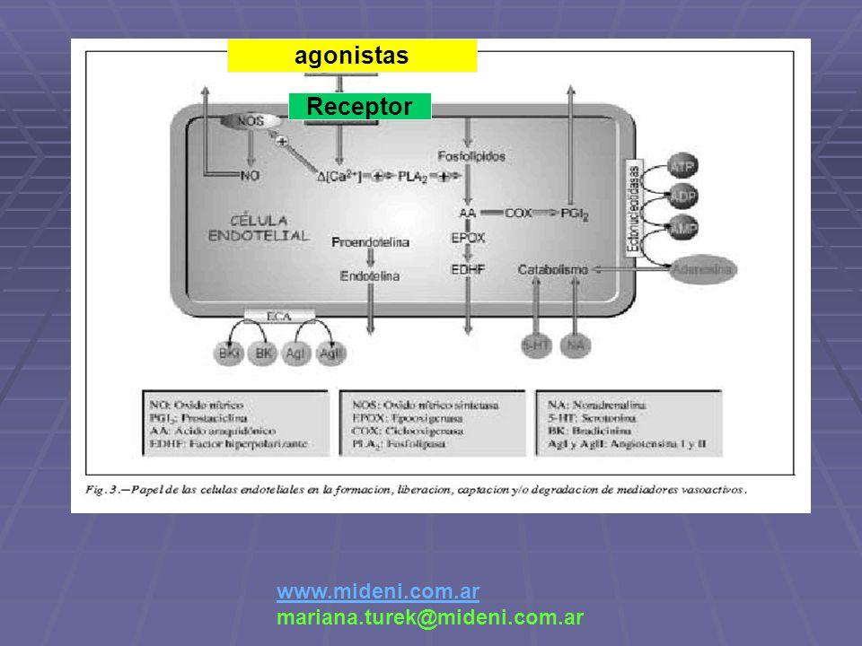 agonistas Receptor www.mideni.com.ar mariana.turek@mideni.com.ar