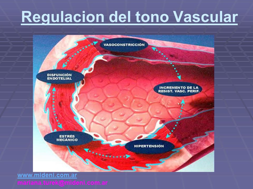 Regulacion del tono Vascular